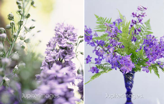 year-round wedding flowers: delphiniums
