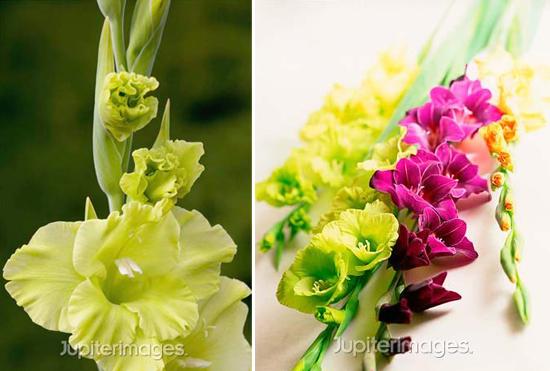 year-round wedding flowers: gladiolas