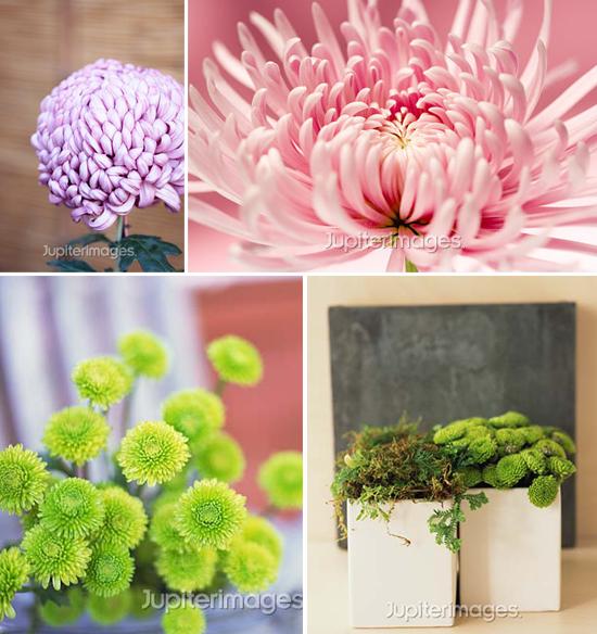 year-round wedding flowers: mums