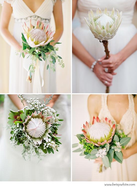 Oh So Pretty Proteas